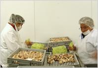 Bourgogne Escargots : beurrage